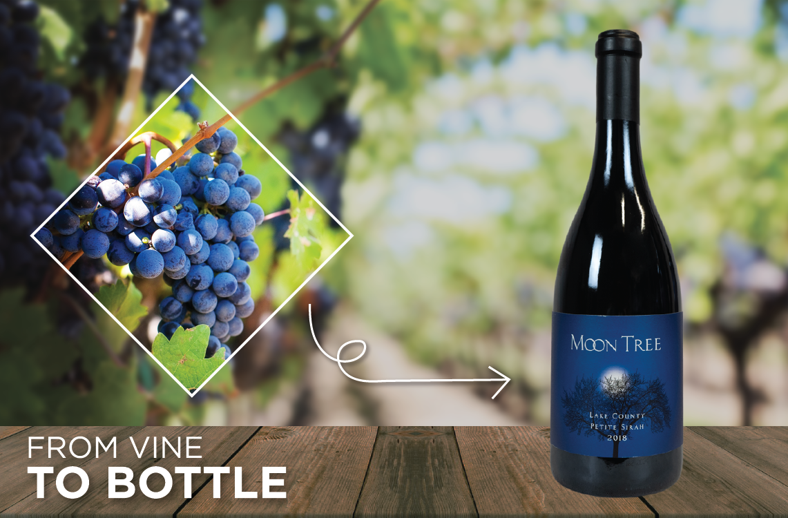 From Vine to Bottle: The Process of Winemaking